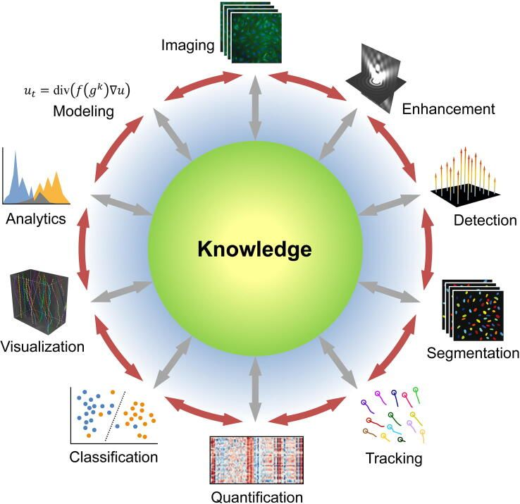 Graphic showing common image analysis goals, including classification, quantification, object identification/tracking, and segmentation.